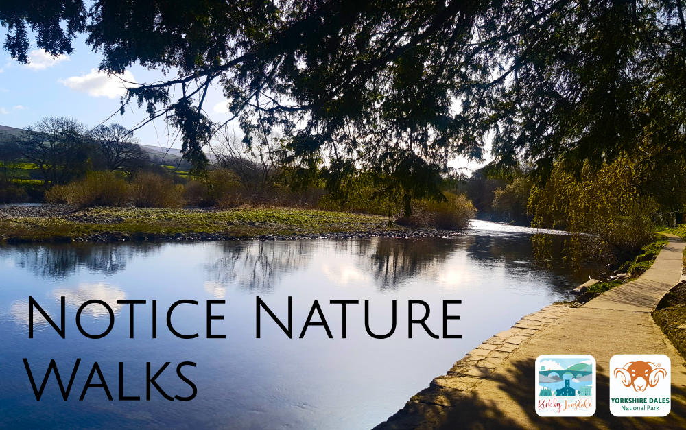 Notice Nature Walks
