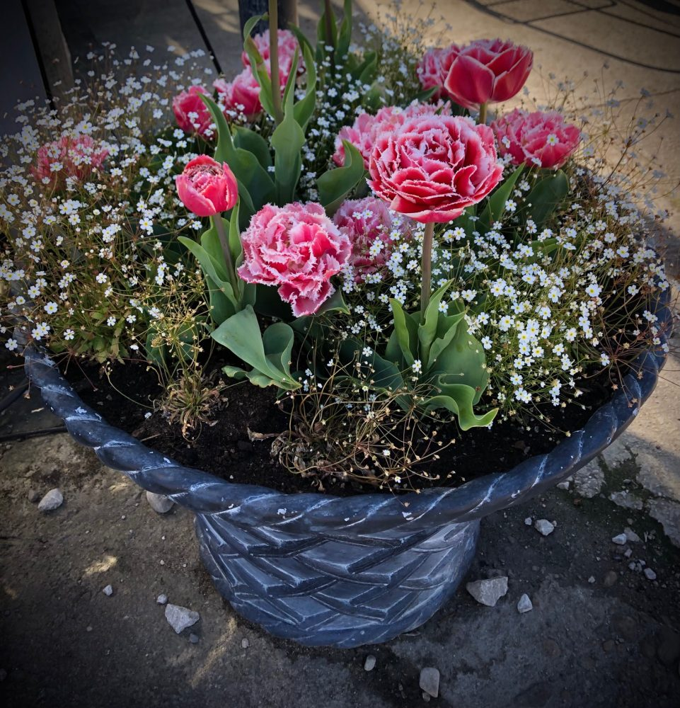 potted flowers by Robin Ree